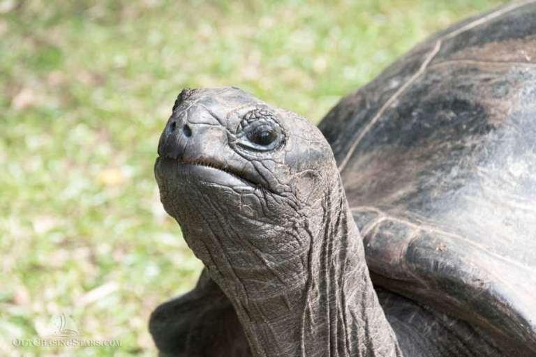 Meeting Giant Tortoises on Curieuse Island