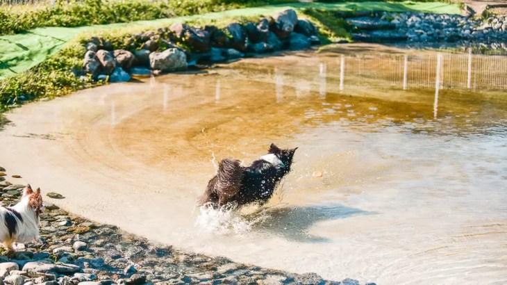神奈川県「寄七つ星ドッグラン」で水遊びレビュー