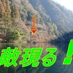 釣り人の天敵現る!! ☆彡 解禁3週間後の奥多摩川