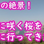 世界が認めた日本の絶景!海と桜とツーリング【モトブログ】