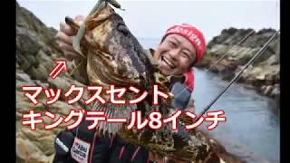 ハンター塩津の田代島磯ロック釣行 50UPベッコウ獲りに密着