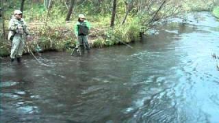 西別川で70オーバーのニジマスにがす