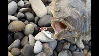 砂浜から大きいヒラメが釣れた。