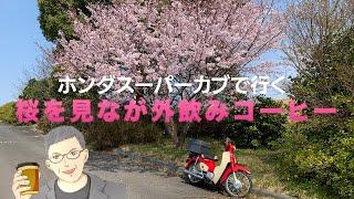 【アウトドアコーヒー】スーパーカブで行く桜見コーヒー