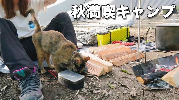 【ソロキャンプ】秋の味覚を満喫しようとしてたら猫が遊びに来ました【Insta360 ONE R】キャンプ飯