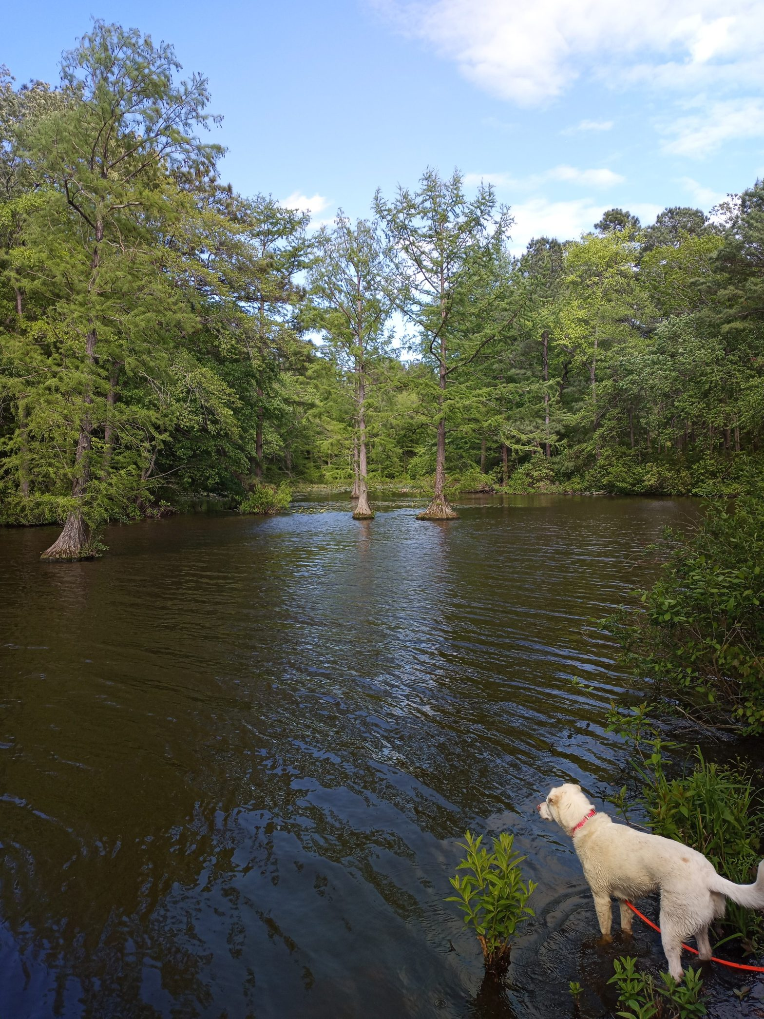 Dog looking across the water at a pond