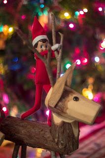 Elf on the shelf riding a reindeer bare back