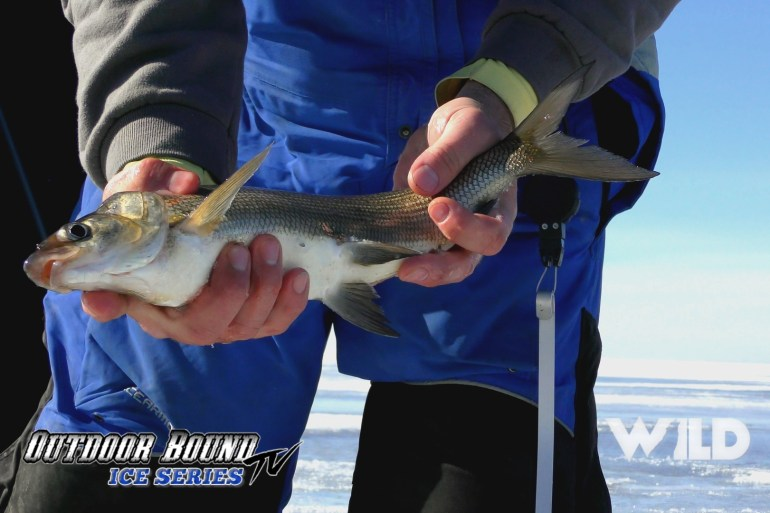 Outdoor Bound TV Greenbay Walleye and Whitefish