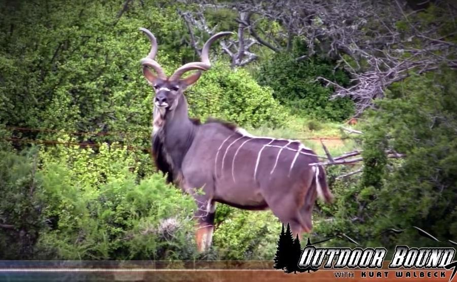 Hunting Kudu in South Africa
