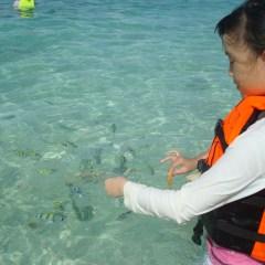 Tropical fish Adventures in Thailand
