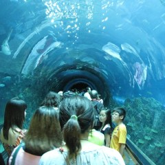Aquarium Visit Local Trips in Phuket