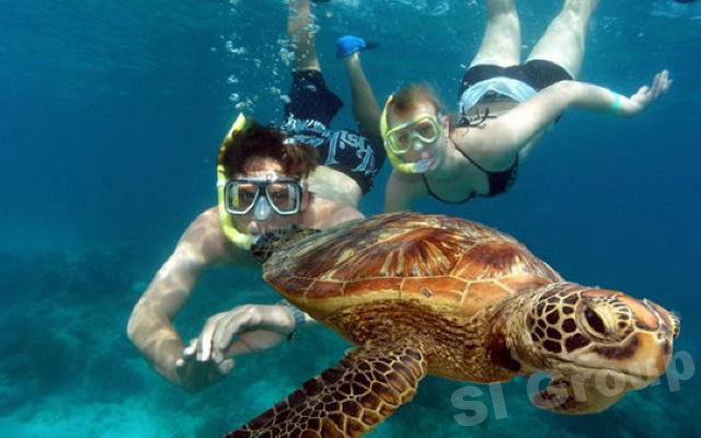 swimming with a giant turtle