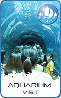 Aquarium visit with Sail in Asia