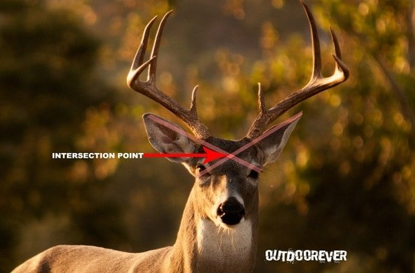 whitetail deer shot placement diagram club car wiring 36v 5 best places to shoot a for single kill outdoorever 3