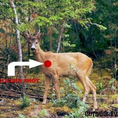 Whitetail Deer Shot Placement Diagram Emergency Lighting Test Switch Wiring Hager 5 Best Places To Shoot A For Single Kill Outdoorever 6 1