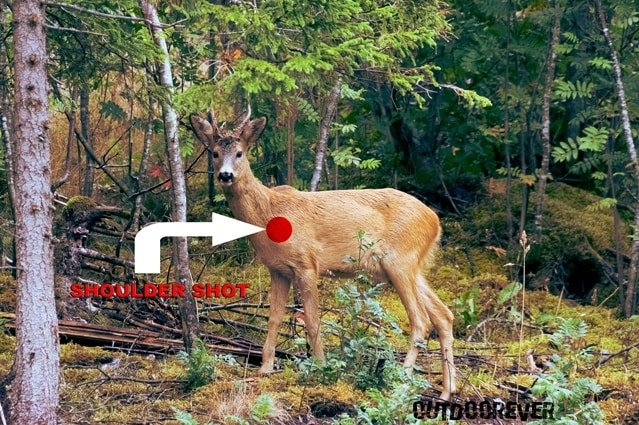 best places to shoot a deer 6 1?zoom=2.625&resize=356%2C237&ssl=1 5 best places to shoot a deer for single shot kill outdoorever