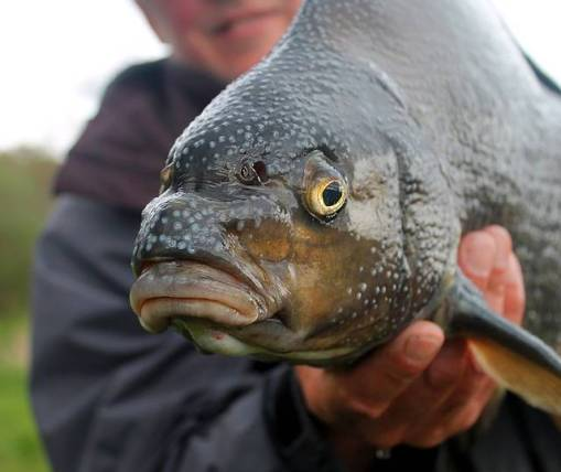 bream fishing tips
