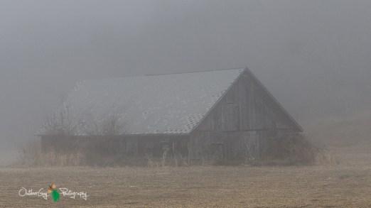 D7K Foggy Morning 001