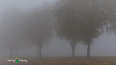 D7K Foggy Morning 010