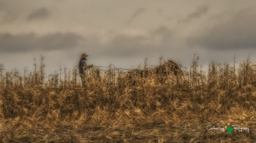 Blair Amish Project 115
