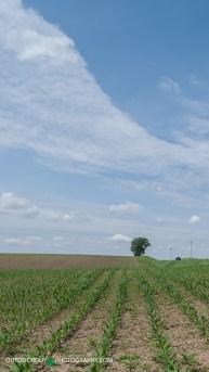 Field of Green