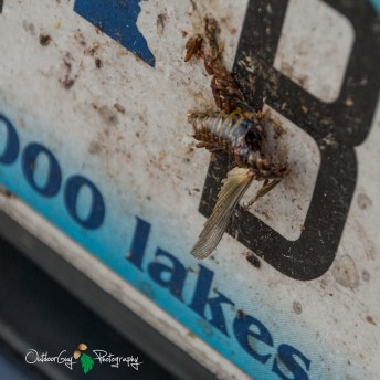 OutdoorGuyPhotography-6284