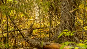 OutdoorGuyPhotography-3679