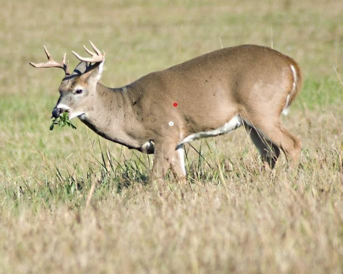 how to tell if deer meat is spoiled