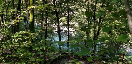 Camp Koren Hochseilgarten