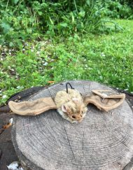 Living nature soft toy bat