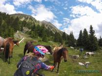 Wildpferde-Reschenpass-Drei-Laender-Enduro-Outdoormind