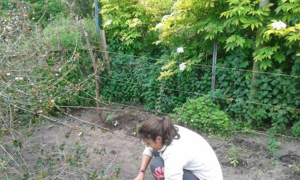 Gartenarbeit beim Wwoofing in Neuseeland