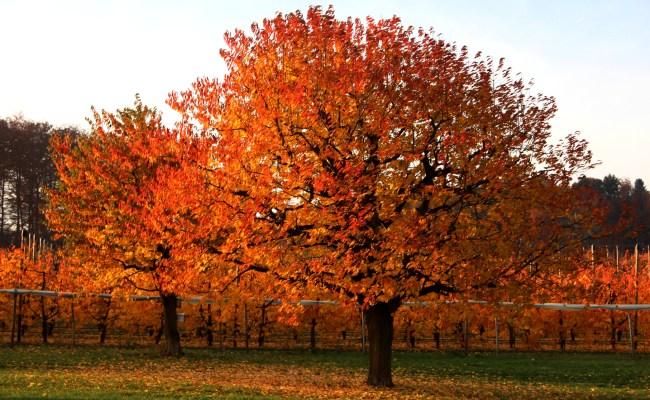 Goldener Oktober Golden October Outdoorpictures