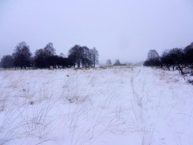 Holzsteg durch das Hohe Venn im Winter
