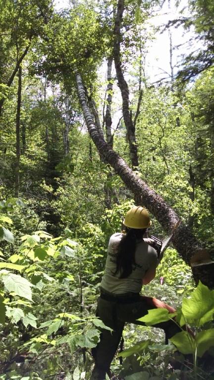SHT Trail Build - Picking a Chainsaw