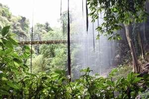 Crystal Showers Falls - Dorrigo Escarpment