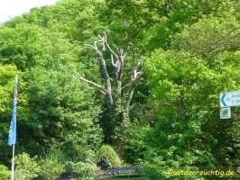 Imposanter Baum
