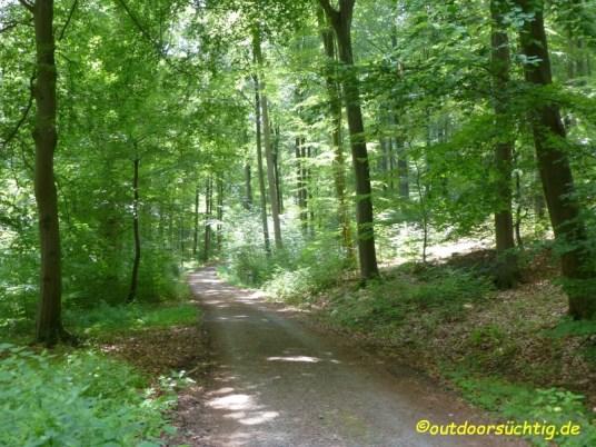Dann durch den Wald