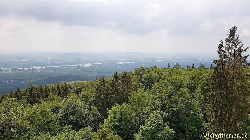 Hallgarter Zange - Ausblick