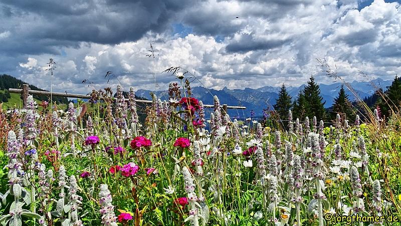 Berghaus Schwaben - Blumenwiese