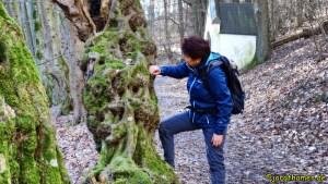 Interessanter Baum am Wegesrand