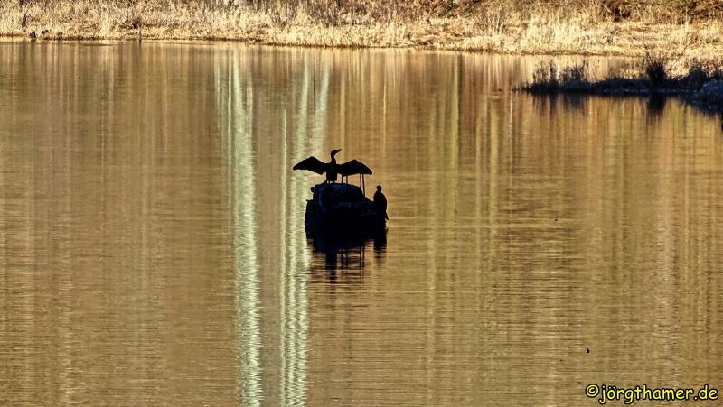 Staubecken Heimbach - Vogel wärmt sich auf