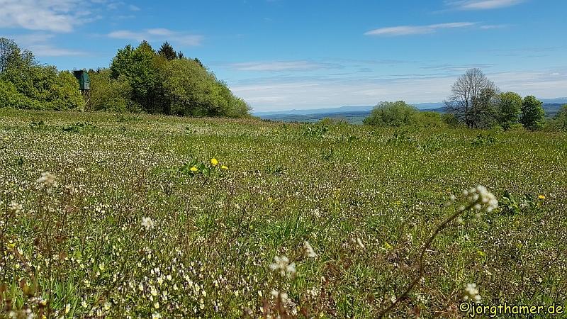 Wiesen und Aussicht am Bergmähwiesenpfad