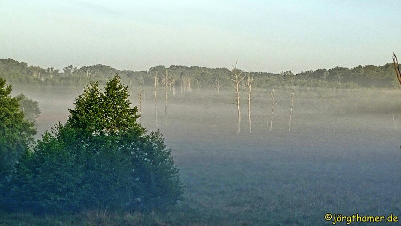 Wandern Mecklenburgische Seenplatte - Nebel im Nationalpark Müritz