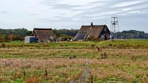 Wandern an der mecklenburgischen Ostseeküste - Langenwerder