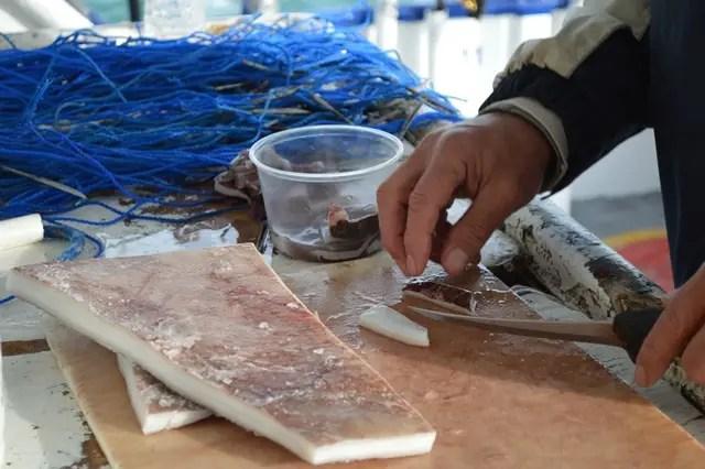 fresh cut squid bait