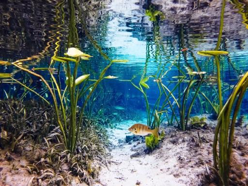 natural springs in florida alexander springs