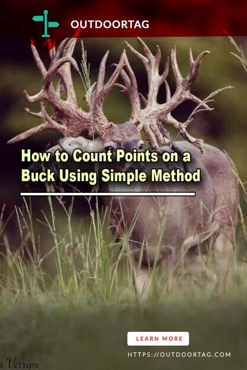 How to Count Points on a Buck Using Simple Method
