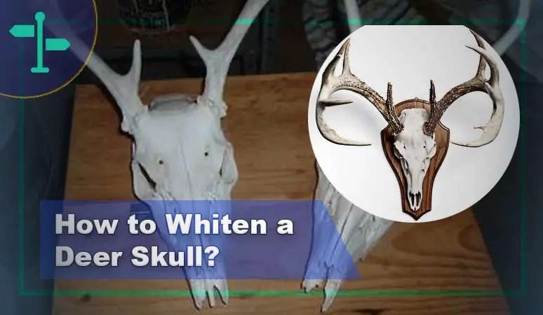 How to Whiten a Deer Skull