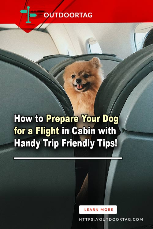 How to Prepare Your Dog for a Flight in Cabin with Handy Trip Friendly Tips.